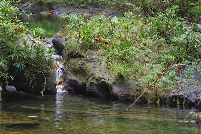 Petit rio. Durango (San Lorenzo, Esmeraldas), 29 novembre 2013. Photo : J.-M. Gayman