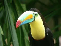 Rainforest Webquest What Animals Live In The Rainforest Plants