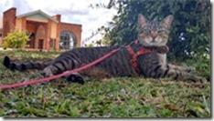 fredy-o-gato-viajante--