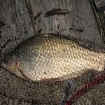 20140805_Fishing_Bochanytsia_013.jpg