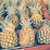 Dev Pineapple (Restore Society)'s profile photo