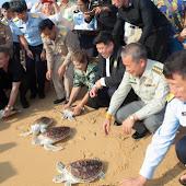 phuket event Mai Khao Marine Turtle Foundation launches Marine Turtle Nesting Site Conservation and Rehabilitation Project 018.jpg