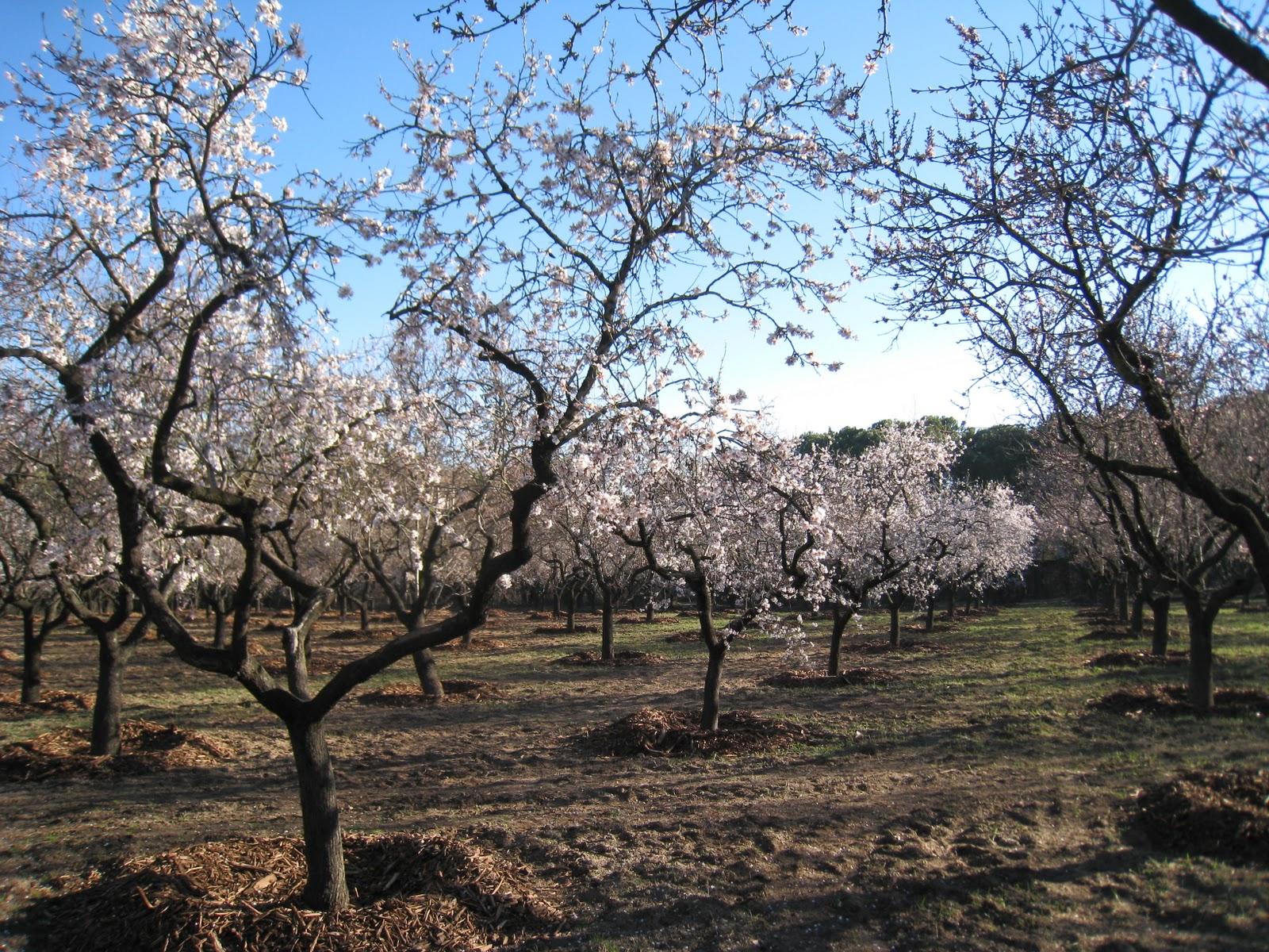 Blog centros de jardiner a arag n - Centros de jardineria madrid ...