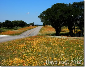 Texas Hill Country 020
