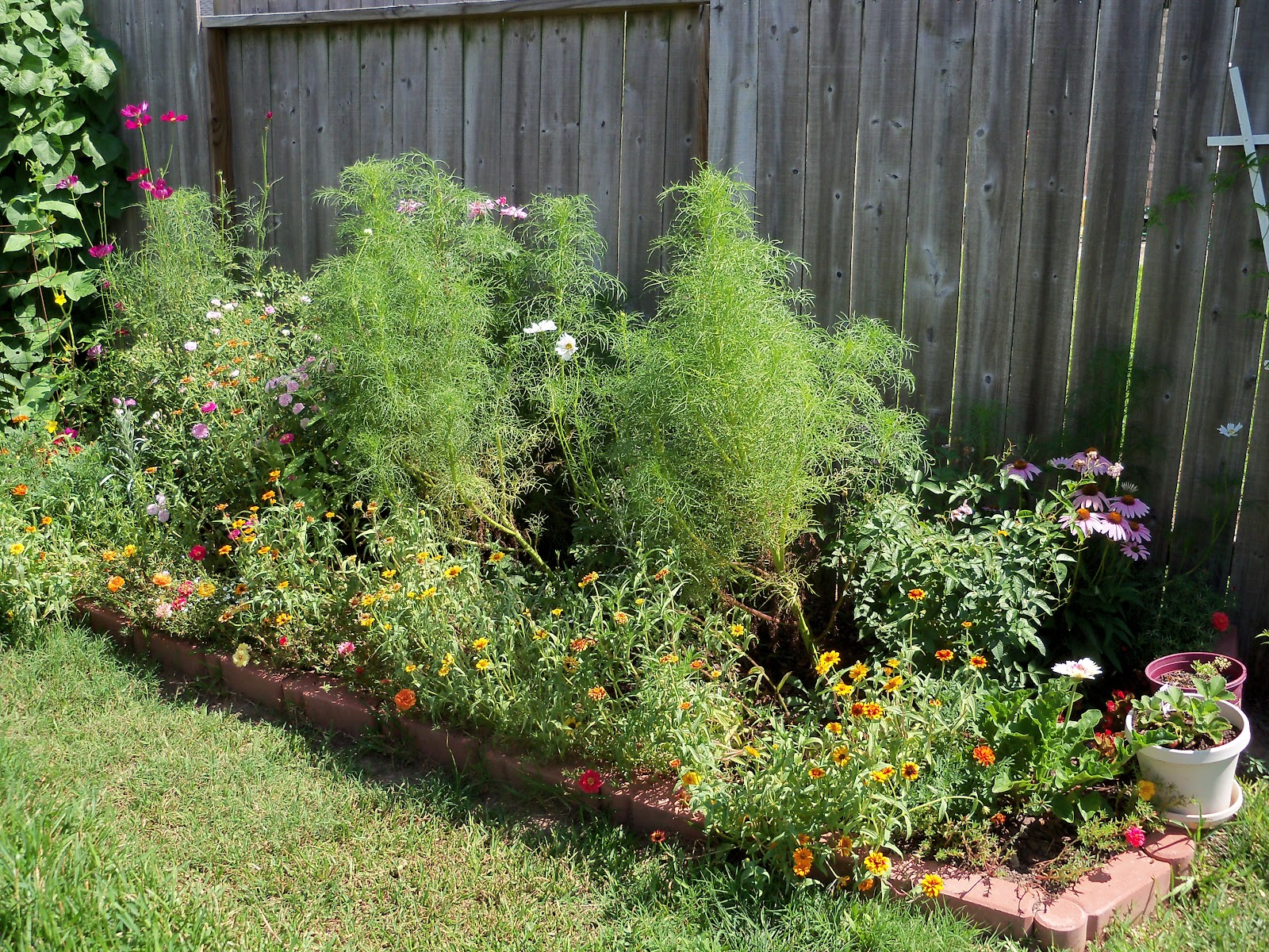 Gardening 2010, Part Three - 101_4285.JPG