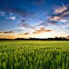 field_at_sunset_hd1080p.jpg