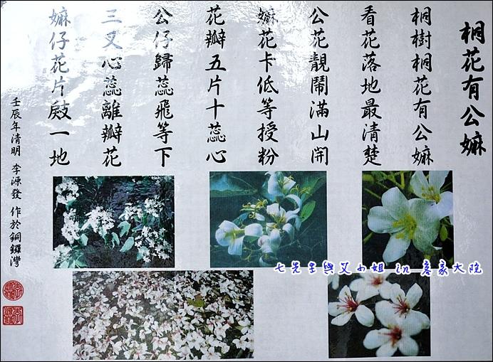 20 桐花有公母