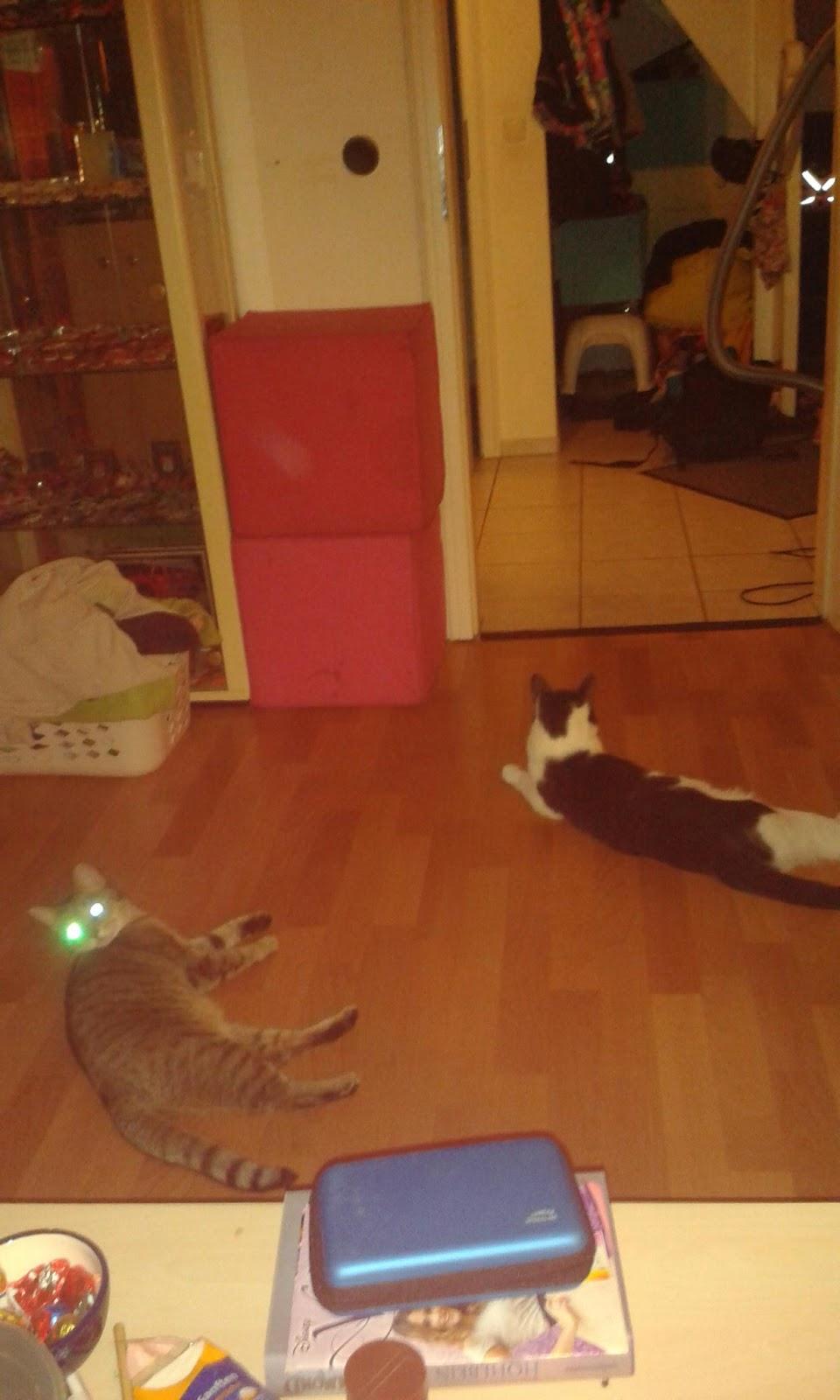 Kleine Katze Und Viel Fun Guten Morgen Katzen Freunde