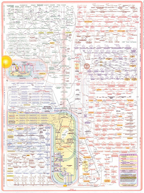 Химические процессы в человеческой клетке