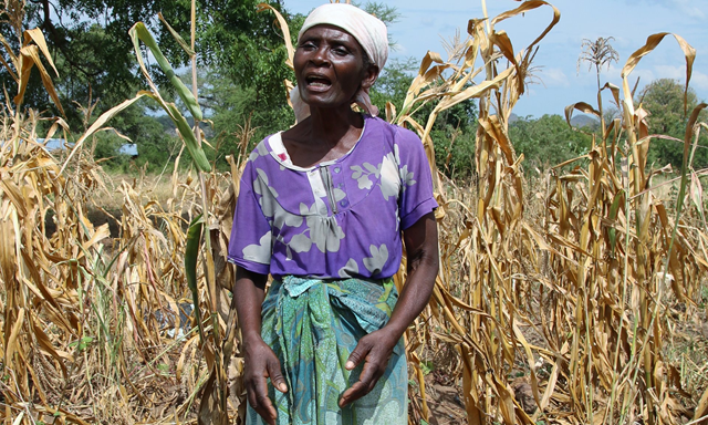 Farmer Serena Gadinala stands next to her wilted crops in the Neno district of southern Malawi, after a second year of deep drought in much of southern and eastern Africa has ravaged crops i 2016. Photo: Tamara van Vliet / OCHA