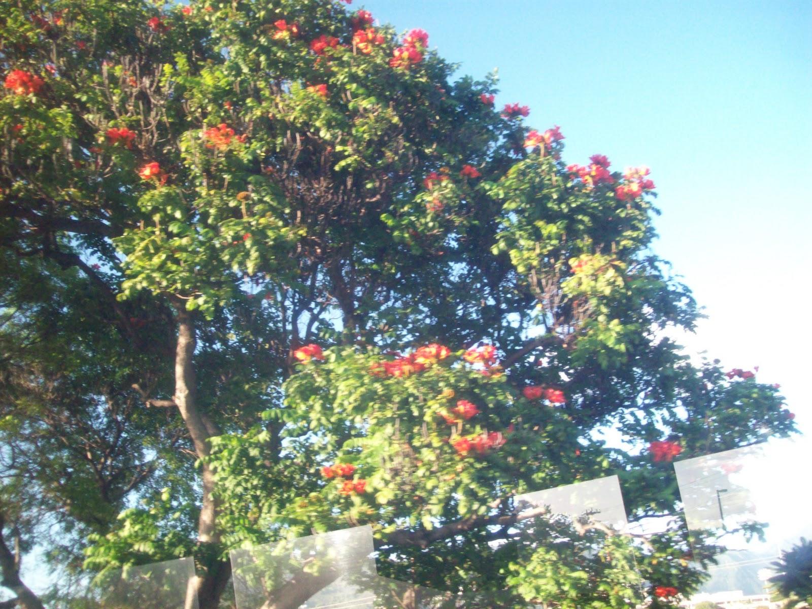 Hawaii Day 3 - 114_1147.JPG
