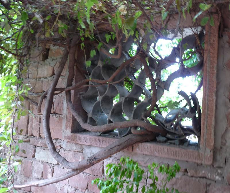 Chine . Yunnan   HEI JING  (ancienne capitale du sel) - P1260633.JPG