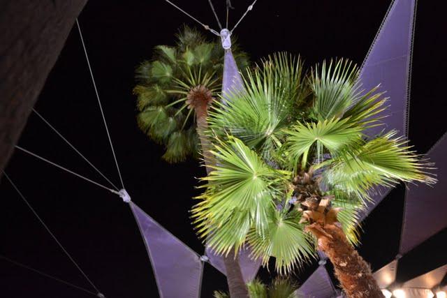 Trip report voyage 1996 et Wdw Orlando 10/2011 - Page 5 DSC_0836