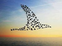 Burung - Burung yang Hijrah