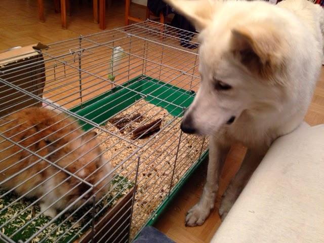 blogger-image--1945627183 %Hundeblog