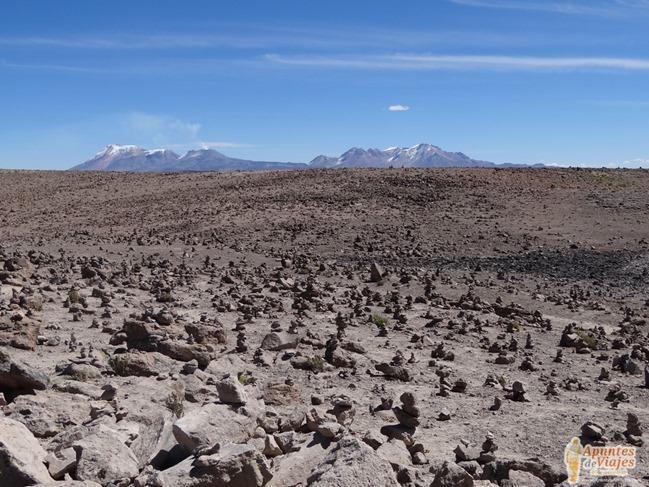 Vicuñas Volcanes Arequipa Chivay Perú 30