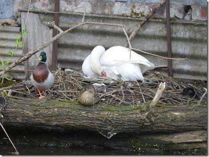 10 nesting near commandery