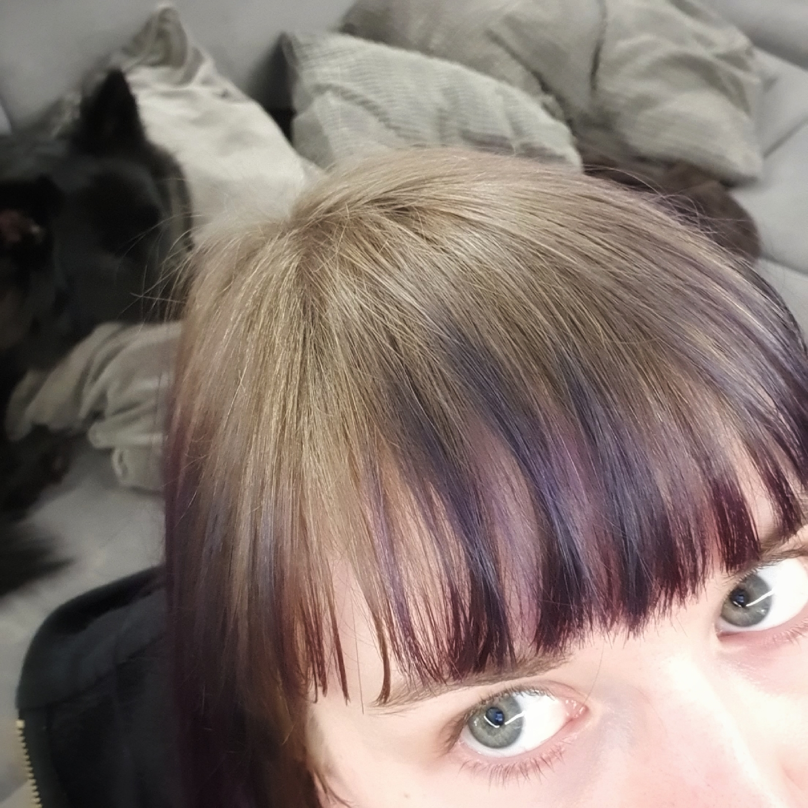 alternative sewing blogger dog photobombing ash blond roots haircolour