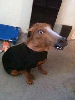 dog with horse mask