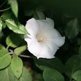 Gardening 2012 - IMG_2777.JPG