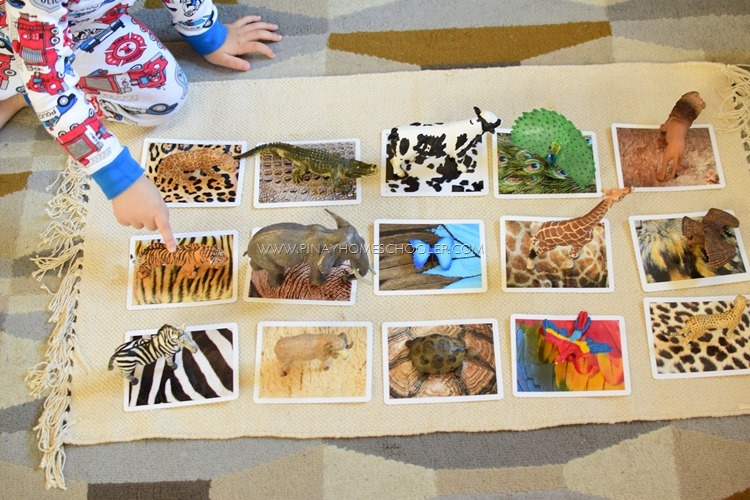 Animal Skin Covers Sensorial Matching Activity for Preschoolers