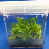 orquidea - DSC02090.JPG