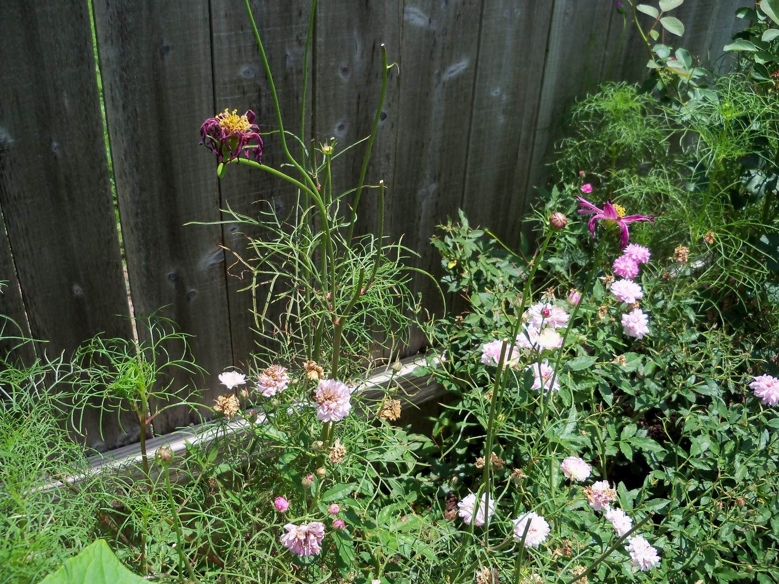 Gardening 2010, Part Three - 101_4838.JPG