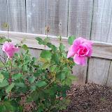 Gardening 2010 - 101_0673.JPG