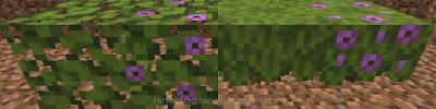 Folhas de azaleia (esquerda) | Azaleia e Azaleia florescida (direita)