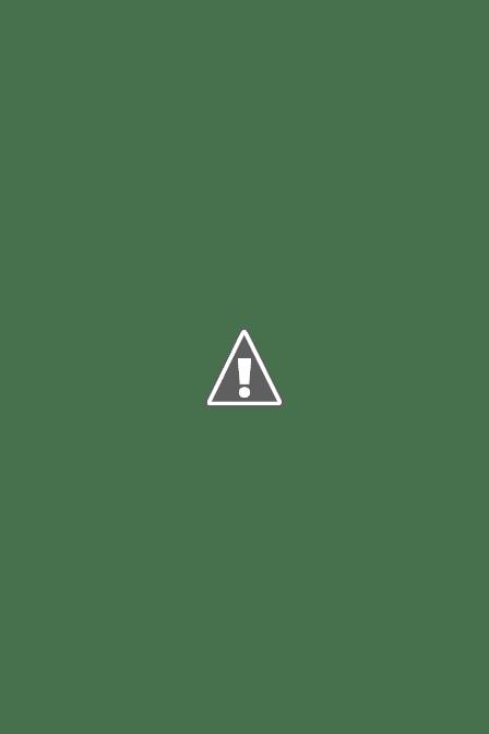 Le jardin en mai... IMG_6320