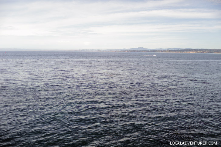 Monterey California Aquarium.