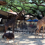 Houston Zoo - 116_8582.JPG
