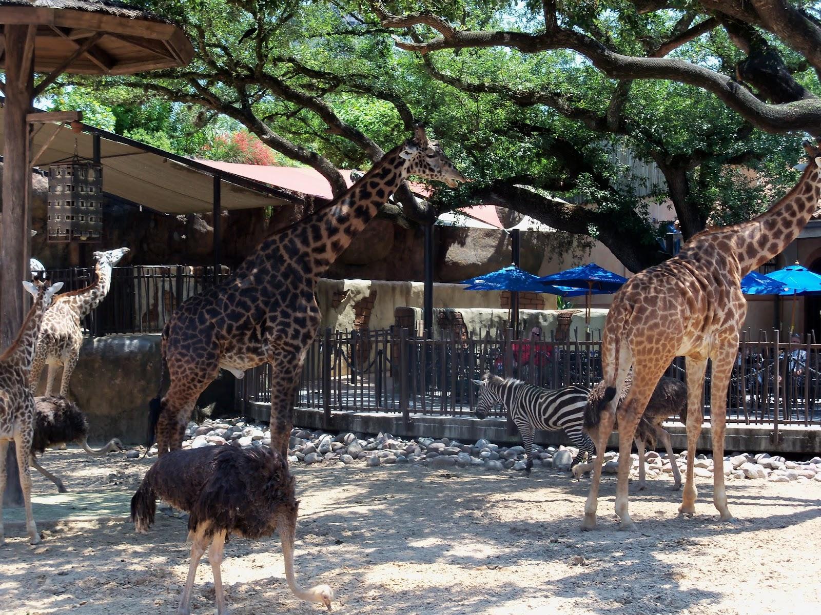 Houston Zoo - 116_8582.JPG