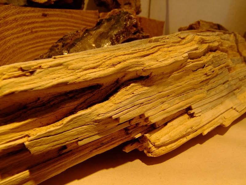 Fa kövület
