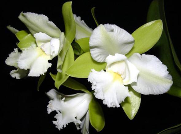 Растения из Тюмени. Краткий обзор - Страница 11 Avo_304234941_std