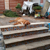 Chekandino u novom domu - 20503044_1751572174857456_1074659508_o.jpg