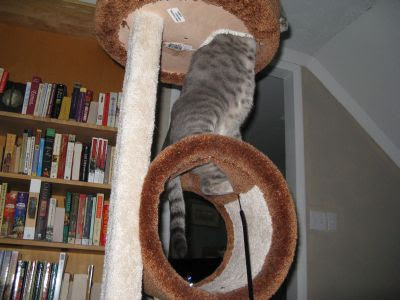 An excellent balancing act, don't you think?