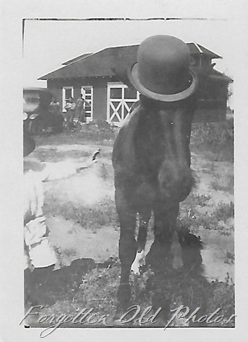 Horse with hat one DL ant
