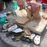 giant oysters eaten with bread and champagne in Texel, Noord Holland, Netherlands