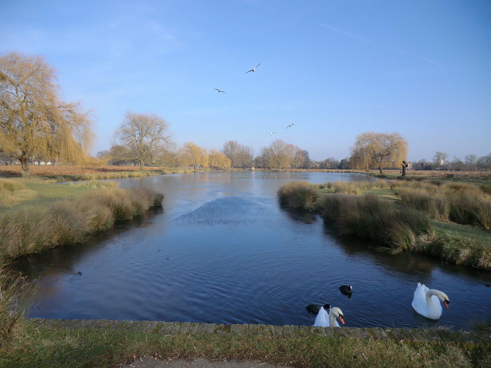 CIMG6448 Leg-of-Mutton Pond, Bushy Park