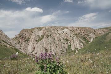 Wiesen mit lila Blumen auf dem Weg zum Meas Pass