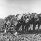 4 Paarden voor de ploeg met Christ Haanskorf_BEW.jpg