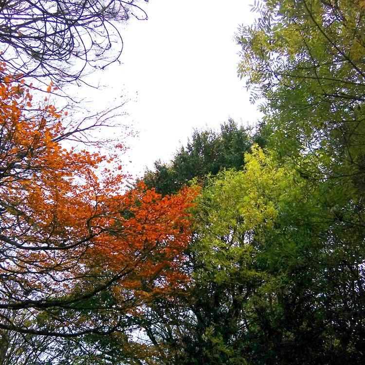 autumnal contrast