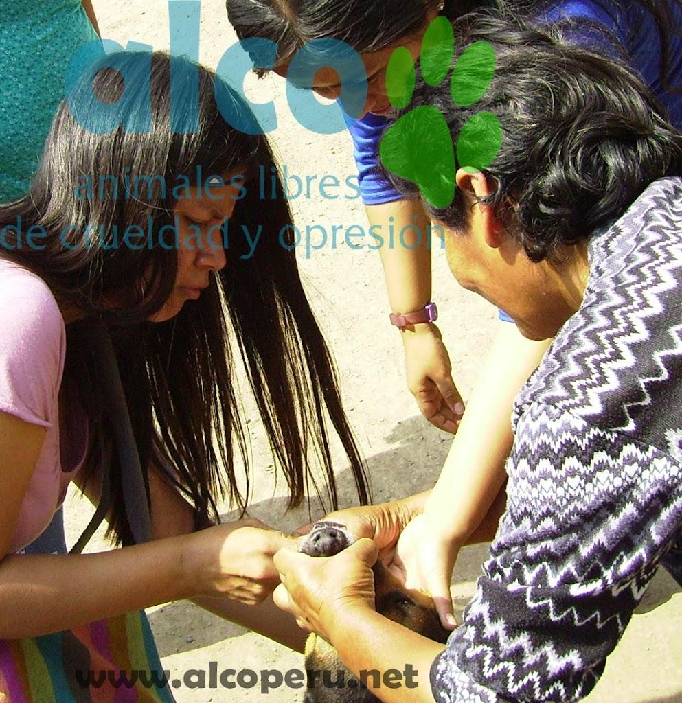 Campaña de asistencia en Mangomarca SJL (25)