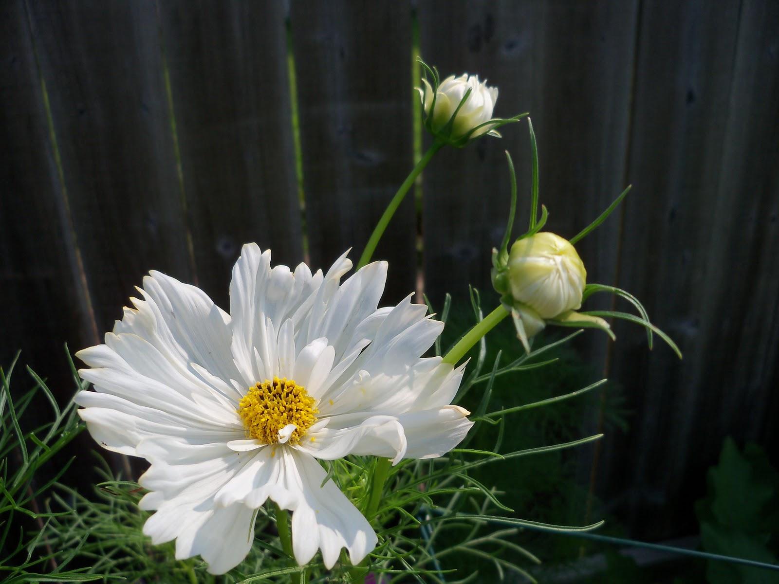 Gardening 2010, Part Two - 101_3084.JPG