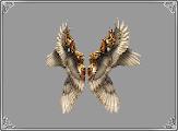 Heavenly+Wings.png