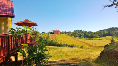 Umpqua Valley visit, View of Becker Vineyards
