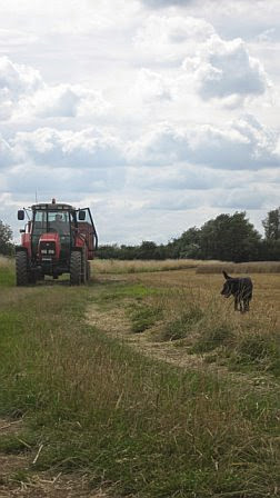Manor Farm Harvest - August 2008 - pic05.jpg