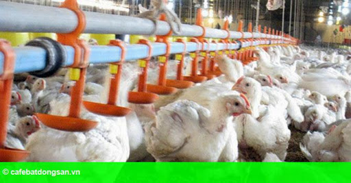 Hình 1: Đầu tư chăn nuôi tại Đồng Nai: Ngoại lấn lướt, nội hụt hơi