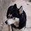 bobanezu's profile photo
